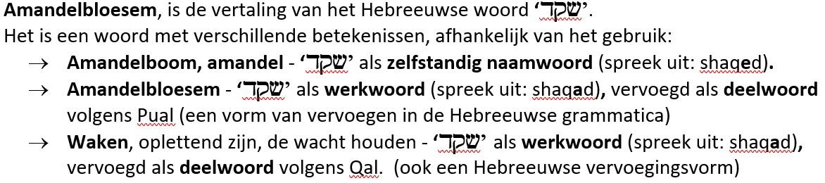 Amandelbloesem Hebreeuws